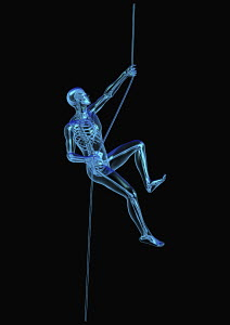 Anatomical man climbing rope