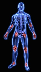 Illuminated human joints in blue anatomical model