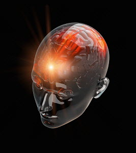 Illuminated activity from red human brain in transparent head