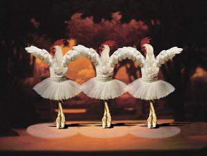 Roosters dancing ballet