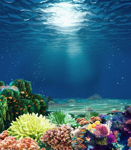 Multicolored underwater coral reef with sunbeam