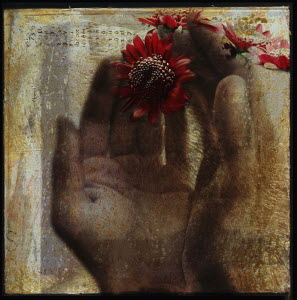 Hands cupping red flowers