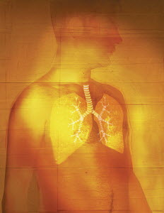 Man with transparent skin displaying lungs