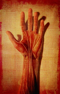 Man's hand with muscle and tendons showing