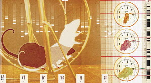 Collage of rats running on exercise wheel and chromosome printout
