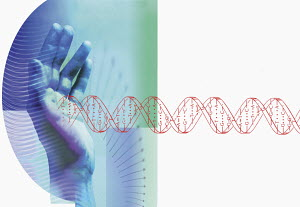 Hands stopping DNA helix