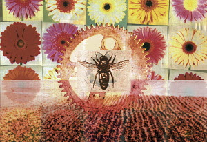 Collage of flowers, bee, cog and field