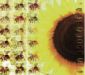 Rows of bees and sunflower with seeds over protractor and circuit board