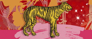 Montage of the Chinese year of the Tiger