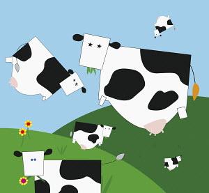 Square cows