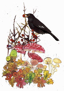 Blackbird with red berry, acorns and toadstools in autumn