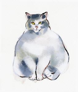 Content, overweight cat
