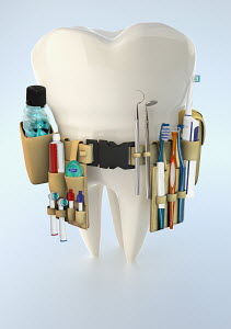 Large tooth with dental supply tool belt