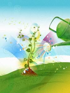 Watering can watering seedling