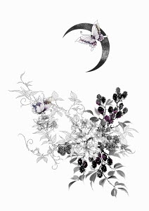 Blackberry bush and butterflies under crescent moon