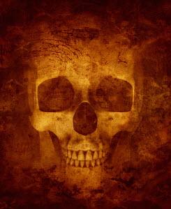 Close up of skull
