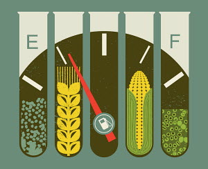Test tubes containing corn and wheat on biofuel fuel gauge