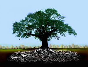 Tree with roots below ground with distant city skyline - Tree with roots below ground with distant city skyline