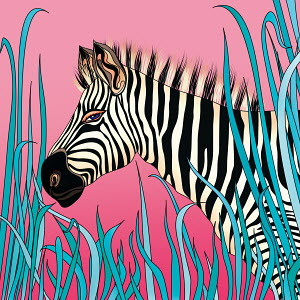 Zebra on pink background