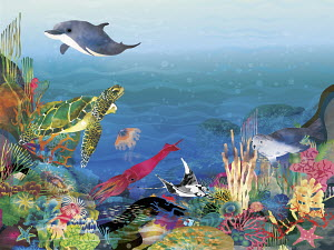 Lots of sea life on colorful seabed
