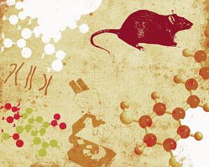 Chromosomes, molecules, microscope and rat