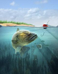 Large fish looking at fishhook