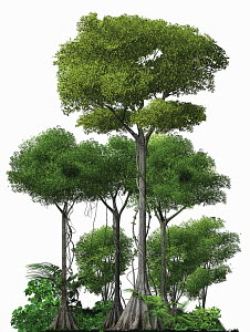 Trees growing in rainforest