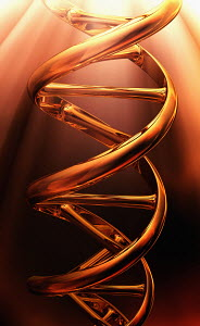 Shiny golden dna double helix