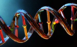 Multicolored dna double helix