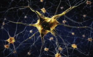 Close up of human nerve cells