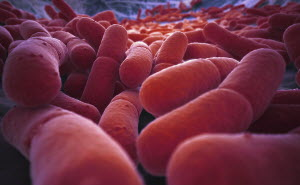 Magnification of lots of red bacteria