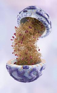 Digitally generated image of high density lipoprotein