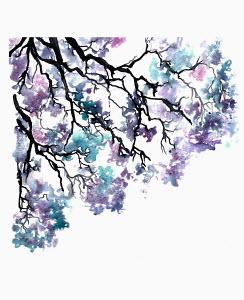 Branch of purple and blue jacaranda blossom