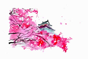 Japanese temple and pink blossom