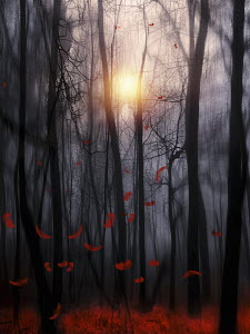 Sun shining behind trees with falling red autumn leaves in atmospheric woods