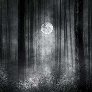 Trees and ferns in moonlight in atmospheric woods - Trees and ferns in moonlight in atmospheric woods