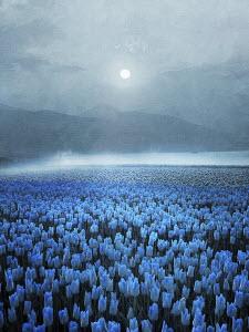 Atmospheric field of blue tulips in mountain landscape in moonlight