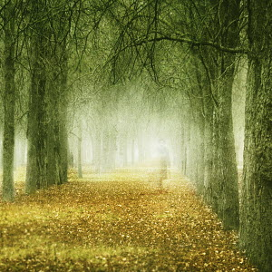 Transparent figure of woman walking through autumn trees and leaves