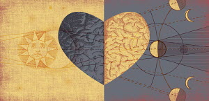 Contrast between the head and the heart