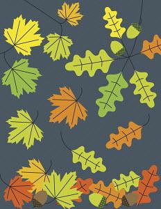Acorns and autumn leaves