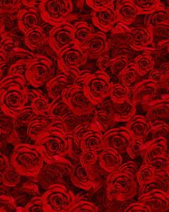 Full frame flower arrangement of red roses
