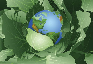 North and South America on globe inside of green cabbage