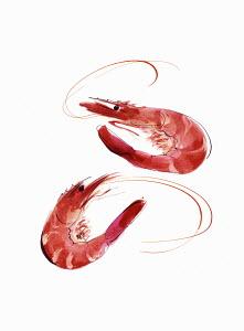 Two fresh prawns