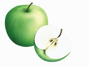 Close up of green Crispin apples on white background