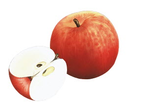 Close up of Fiesta apples on white background