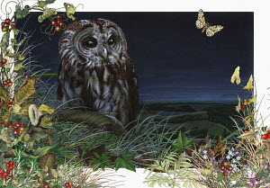 Tawny owl (Strix aluco) in foliage at night