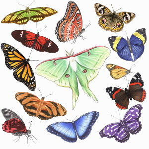 Various multicolor butterflies on white background