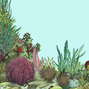 Sea urchins and sea life on the seabed