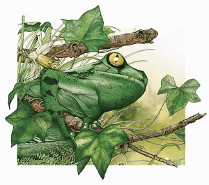 Tree frog on twig in foliage