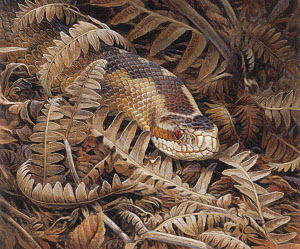 Adder (Vipera berus) snake camouflaged in dry ferns